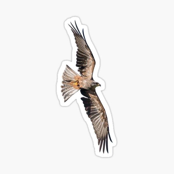Blank Hawk Sticker