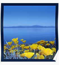 Blue Sky Yellow Flowers Poster