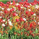 Flower Bed by Arvind Singh