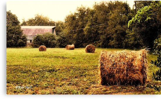 """Bales Along the Tree line""... prints and products by Bob Hall©"
