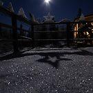 Shadows in the moonlight by Jackie Muncy