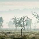Misty Morn  by Michelle Cocking