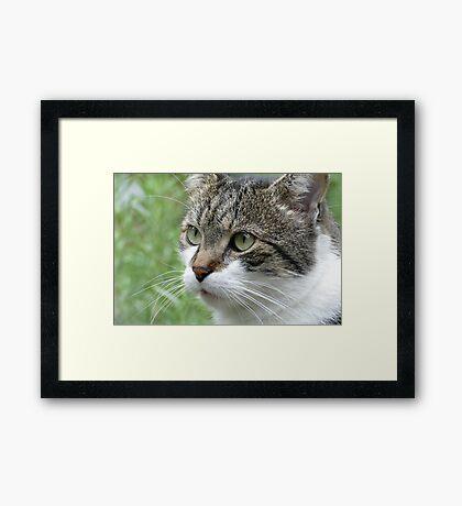 Emil #1 Framed Print