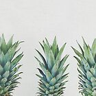 Pineapple Trio by Cassia Beck