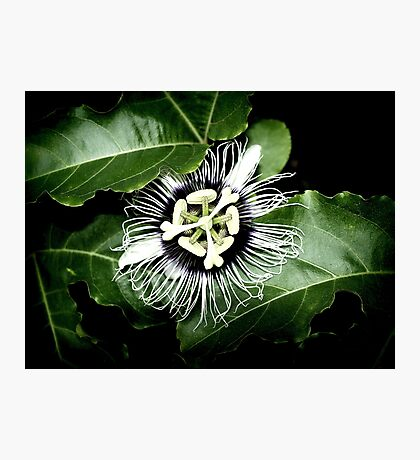Yellow Passion Fruit Flower 2 Photographic Print