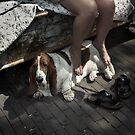 Dog's life by Farfarm