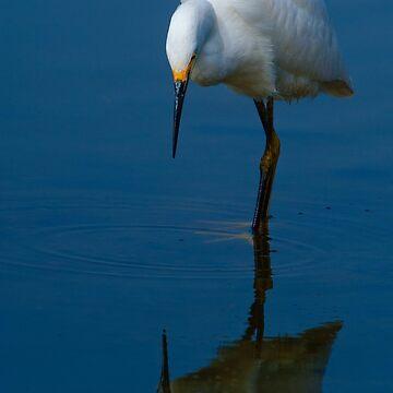 Snowy Egret (Egretta thula) by eyalna