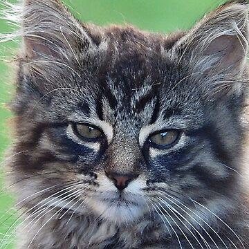 feral kitten by mlgkats