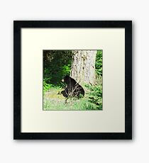 Bear At Rest - Canada Framed Print