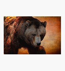 Grizzly Bear Painted Photographic Print