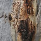 The Tree Bark Collection # 8 by Philip Johnson