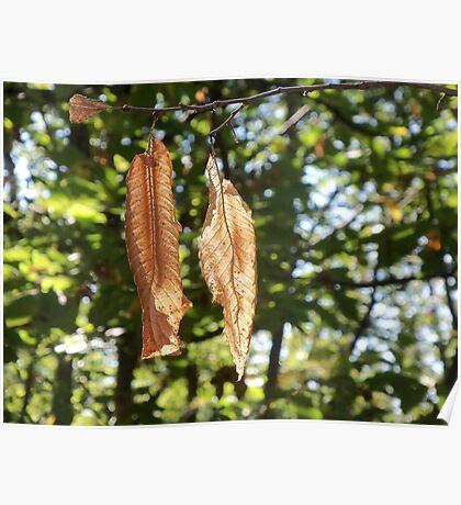 two leaves for you my friend!!!--- 1500 VISUALIZZAZ. SETTEMBRE 2013-VETRINA RB EXPLORE 27 NOVEMBRE 2012 - Poster