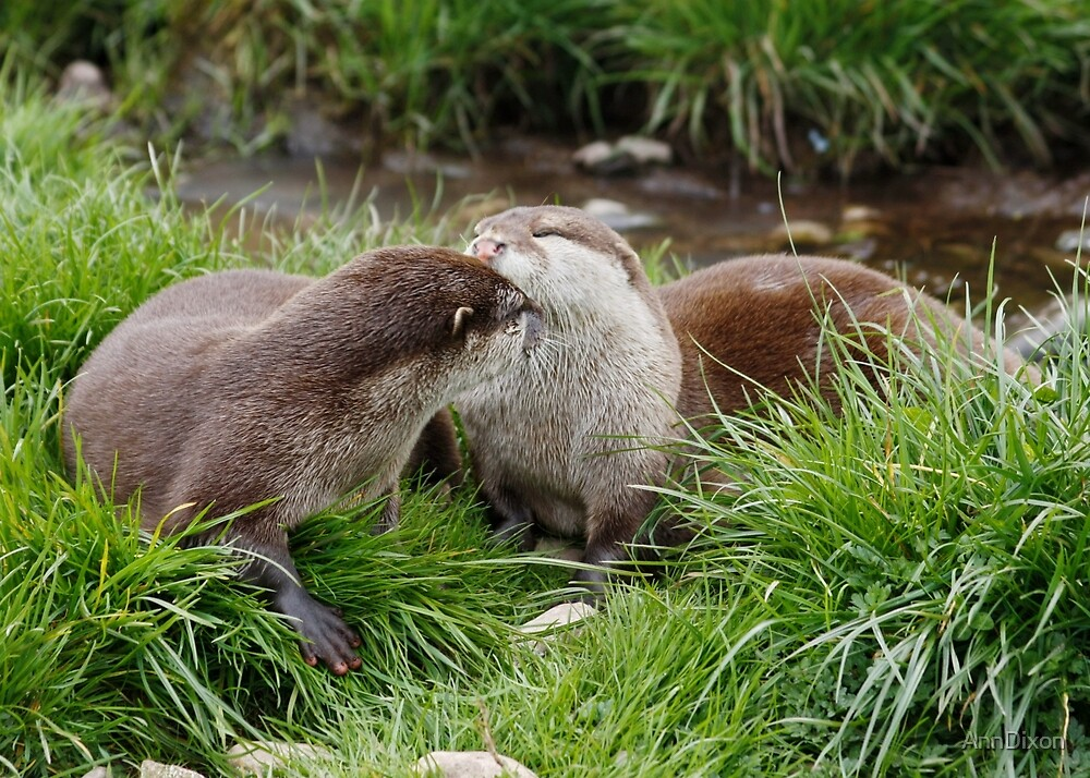 Otterly in Love : Protecting Wildlife by AnnDixon