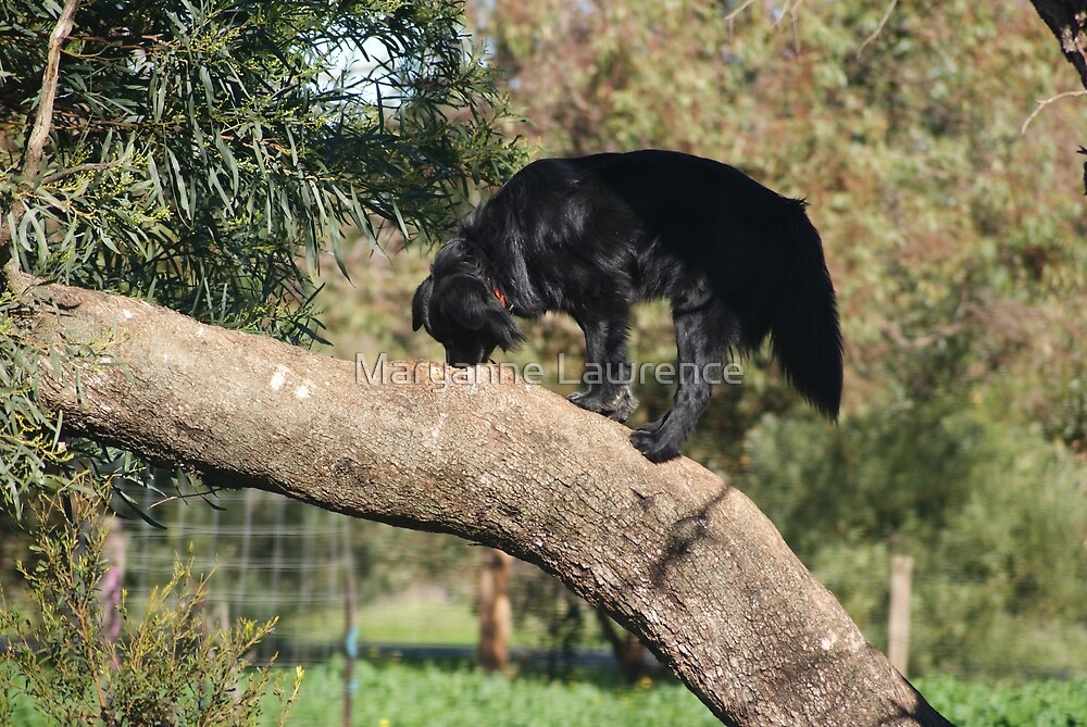 On Branch by Maryanne Lawrence