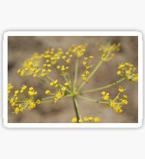 Dill Flower Sticker
