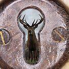 stag through a keyhole by daveashwin