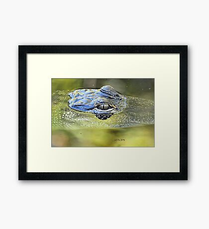 Gator Eye (Alligator mississippiensis) Framed Print