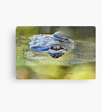 Gator Eye (Alligator mississippiensis) Canvas Print