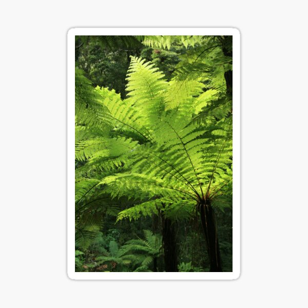 Firefly and Ferns Decal