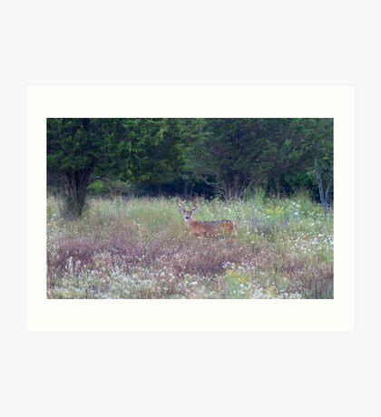 Buck in the Meadow - White tailed deer buck Art Print