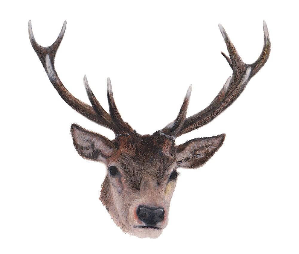 Deer by byrebecca
