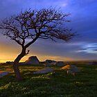 Dog Rocks by Darren Stones