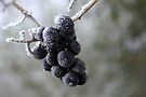 Frost on Berries by Jo Nijenhuis