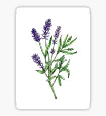 Lavendel Illustration Sticker
