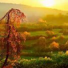 Sunset Glory by Igor Zenin