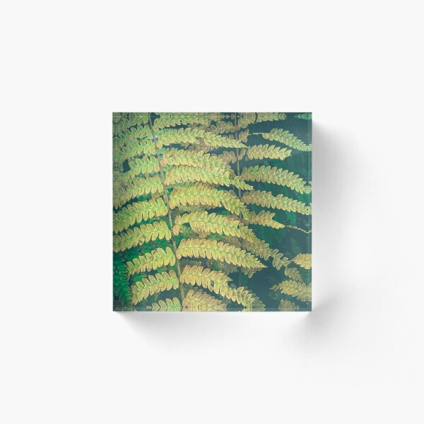 Woodland Fern Acrylic Block