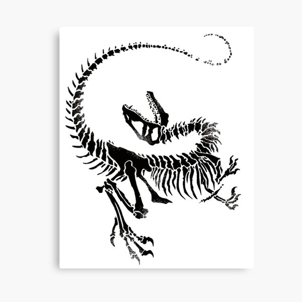 Velociraptor Skeleton Print Canvas Print