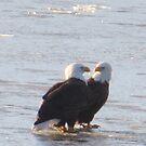 Eagles in love! by klziegler