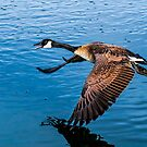 Mother Goose by George I. Davidson