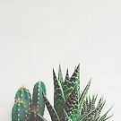 Cactus & Succulents by Cassia Beck