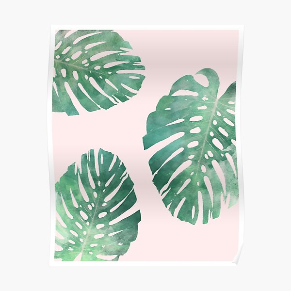 Watercolor tropical monstera leaves on pink background Poster