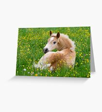 Haflinger Horse Cute Foal Resting in a Flowerbed Greeting Card