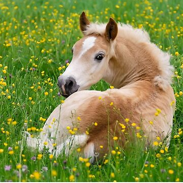 Haflinger Horse Cute Foal Resting in a Flowerbed by kathom