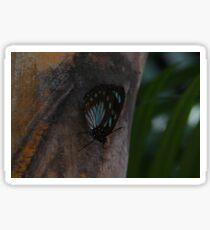 Mocker swallowtail Sticker