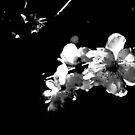 Black and White by Evita