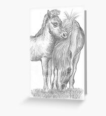 Shetland pony and foal Greeting Card