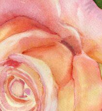 Spring Rose Sticker
