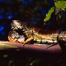 Technicolor Iguana by Bill Wetmore