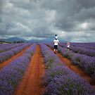 A Field of Lavender by Karine Radcliffe