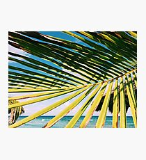 Palm of shades Photographic Print