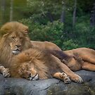 The Two Lions by Linda Cutche
