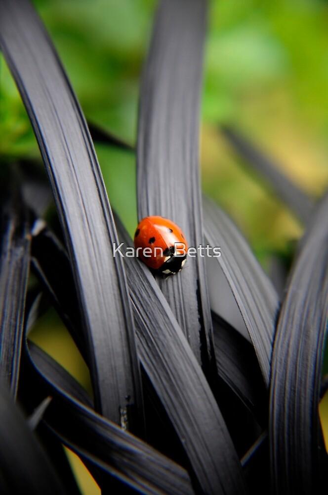 Ladybird by Karen  Betts