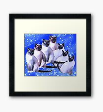 Siamese Cats  Framed Print