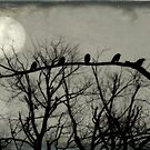 Night Crows by gothicolors