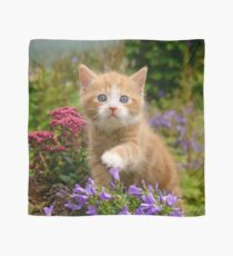 Cute Ginger Cat Kitten in a Garden Photo Portrait Scarf