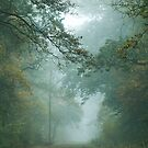 Misty Treetops by stereocolours